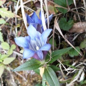 丹沢表尾根の菩提峠~三の塔~烏尾山往復、秋の風景と花