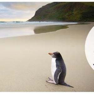 ANAのニュージーランド航空 減額マイルキャンペーン ビジネスクラスの特典チケットを取りました