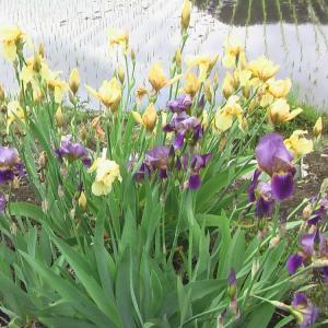 花と野菜  5月 2020-5-23