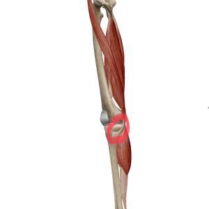 膝の内側の痛み~鵞足炎(がそくえん)