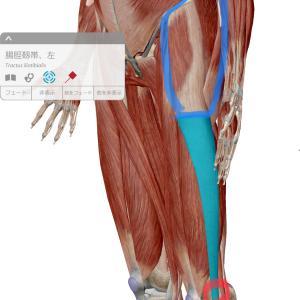 膝の外側の痛み~腸脛靭帯炎