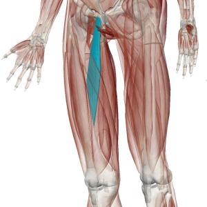 股関節の付け根の痛み~内転筋付着部炎