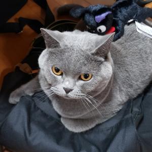 ゴキvs猫