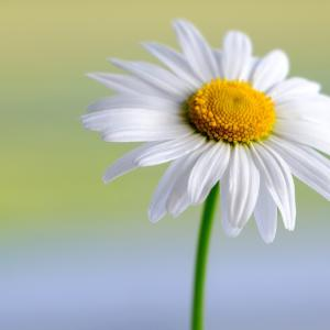 「自分らしく生きる」とは、自分をどんどん表現すること