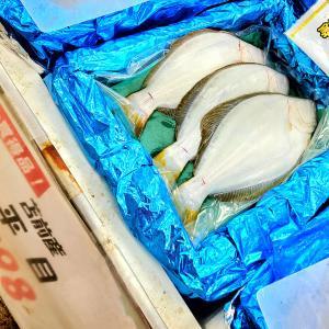 【おうちご飯】ヒラメの煮付け&スルメイカの刺身卵黄醤油&ゴロ味噌