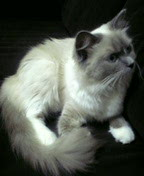 猫ネコ大好き