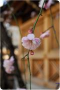春の気配〜梅や桜