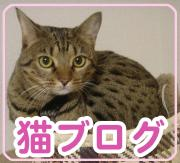 猫ブログのお友達☆