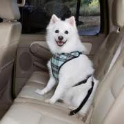 愛犬とおでかけ 旅行する