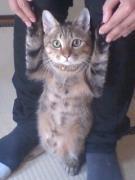 変な鳴き声の猫しゃべる猫