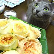 猫の記念日