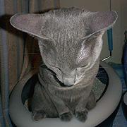 猫のトイレ事情
