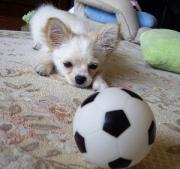 犬と遊ぶ☆