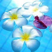 ハワイ大好き♪