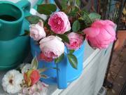 無農薬・減農薬のバラ作り