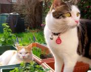 イギリスで猫と生活