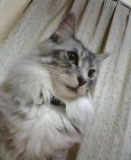 猫が登場する物語(創作)