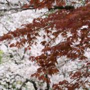 四季の風物詩
