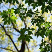 葉っぱLovers