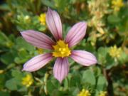 庭や花のページ