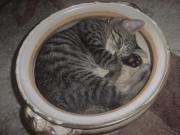 猫・のんびり画像