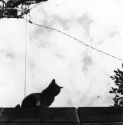 モノクロで猫を撮ろう