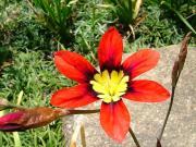 花や虫、野鳥、風景などの写真