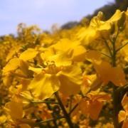 花(写真)