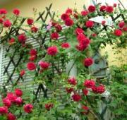 クライマーの庭♪素敵なツル植物