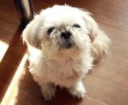 犬の健康や長生き、病気や介護など