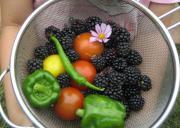 ハーブ、ポタジェ(菜園)、薔薇を楽しむ