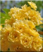 * お花のアイテム&写真  *