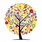 果樹・果物の木・フルーツの木
