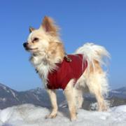 小さくてもワイルド犬