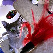 猫のおもちゃ