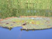 東海3県バス釣り 激シブ地帯の癒しの場