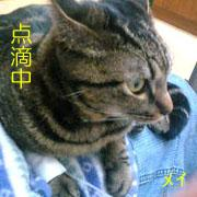 猫の病気・治療記録