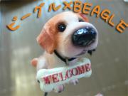 ☆ビーグル×BEAGLE☆