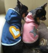 犬の洋服・雑貨♪