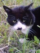 あの有名猫に似ている猫