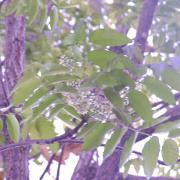 奇跡の木「ニーム」について考える