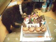 ☆猫大好き☆