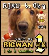 デカわん集まれ〜BIGWAN1同盟