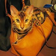 猫と一緒に旅行