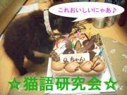 ☆猫語研究会☆