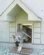 犬と住む家