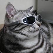 猫とあそぶ♪猫であそぶ♪