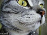〜猫のニオイ〜
