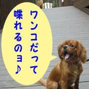 ☆イヌゴエ☆Uo・ェ-oU/お喋りワンコ集まれ〜