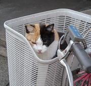 野良猫・よそ猫・ネコ広場